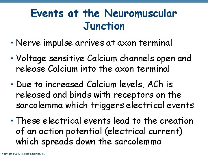 Events at the Neuromuscular Junction • Nerve impulse arrives at axon terminal • Voltage