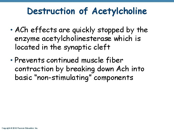 Destruction of Acetylcholine • ACh effects are quickly stopped by the enzyme acetylcholinesterase which