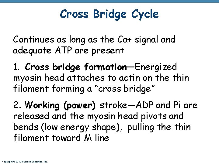 Cross Bridge Cycle Continues as long as the Ca+ signal and adequate ATP are