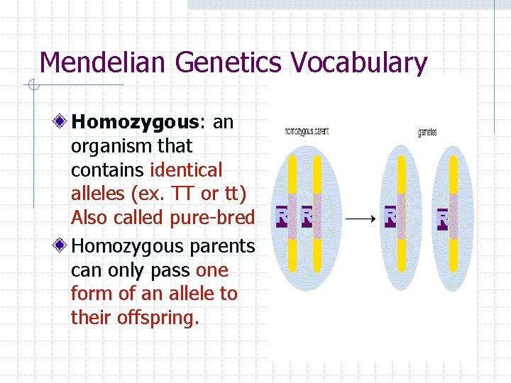 Mendelian Genetics Vocabulary Homozygous: an organism that contains identical alleles (ex. TT or tt)