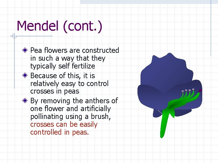 Mendel (cont. ) Pea flowers are constructed in such a way that they typically