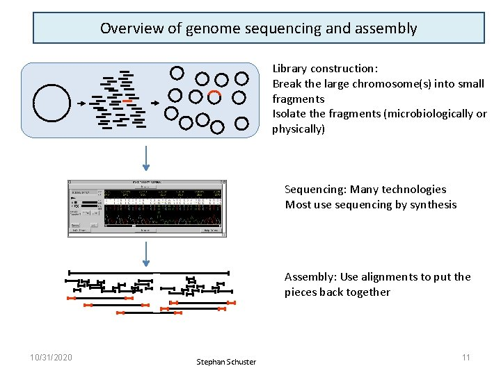 Overview of genome sequencing and assembly Library construction: Break the large chromosome(s) into small