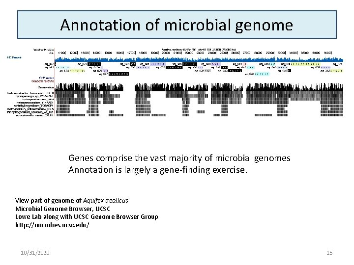 Annotation of microbial genome Genes comprise the vast majority of microbial genomes Annotation is