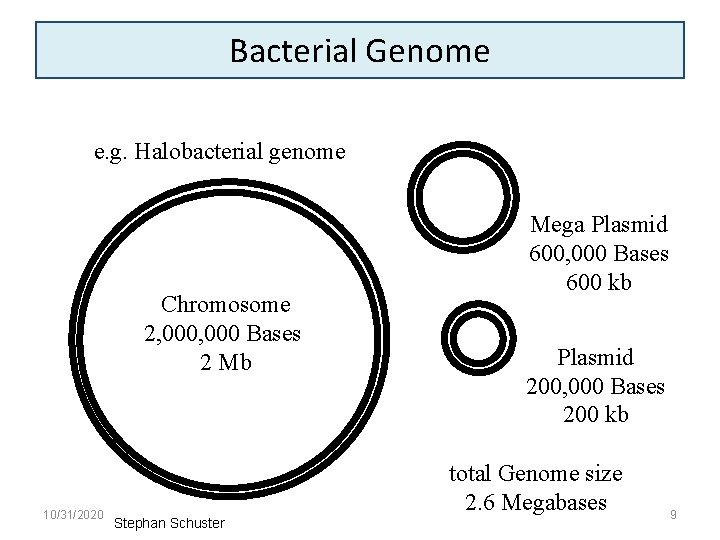 Bacterial Genome e. g. Halobacterial genome Chromosome 2, 000 Bases 2 Mb 10/31/2020 Stephan