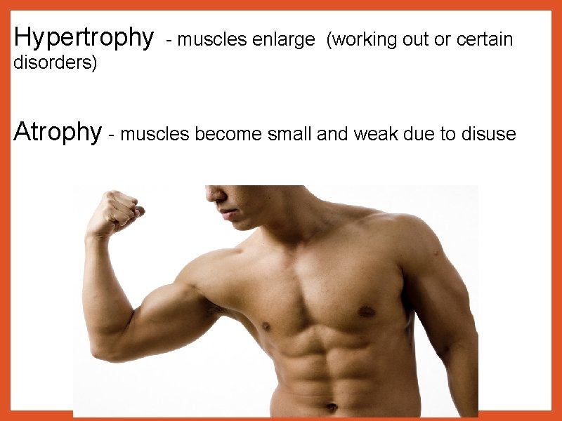 Hypertrophy - muscles enlarge (working out or certain disorders) Atrophy - muscles become small