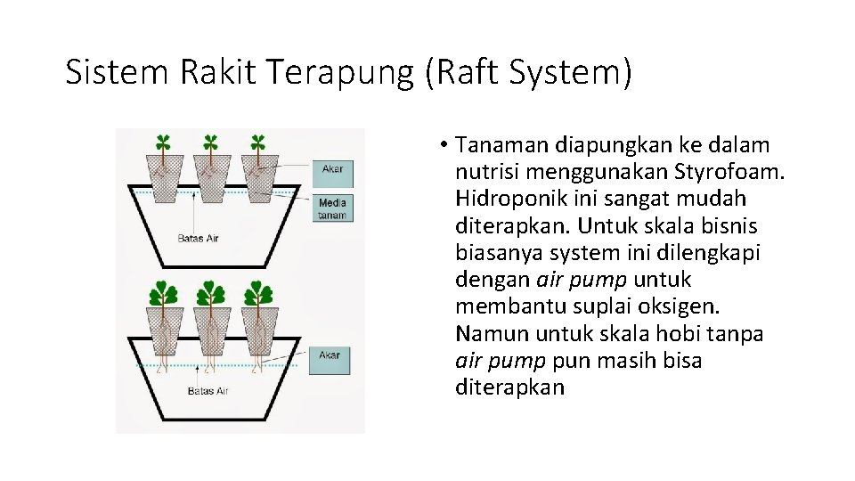 Sistem Rakit Terapung (Raft System) • Tanaman diapungkan ke dalam nutrisi menggunakan Styrofoam. Hidroponik