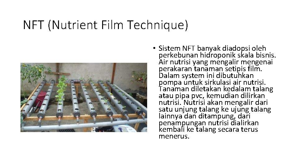 NFT (Nutrient Film Technique) • Sistem NFT banyak diadopsi oleh perkebunan hidroponik skala bisnis.
