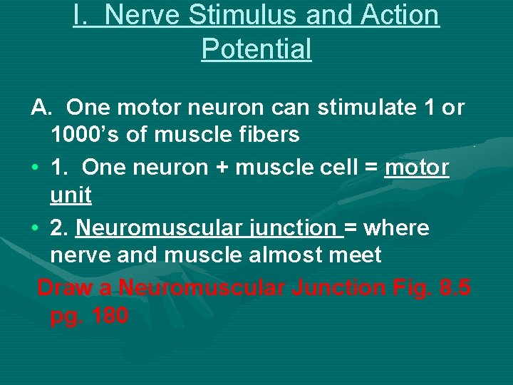 I. Nerve Stimulus and Action Potential A. One motor neuron can stimulate 1 or