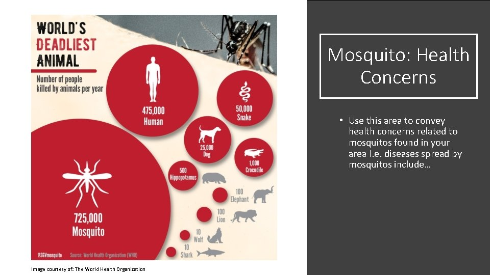 Mosquito: Health Concerns • Use this area to convey health concerns related to mosquitos