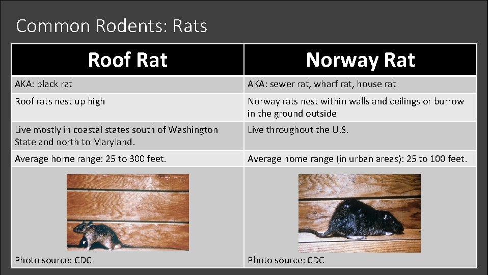 Common Rodents: Rats Roof Rat Norway Rat AKA: black rat AKA: sewer rat, wharf