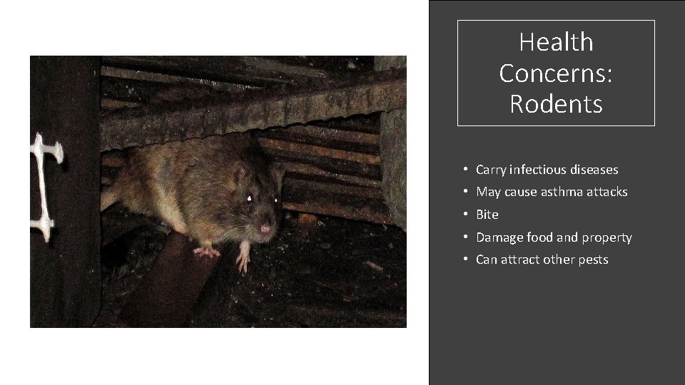 Health Concerns: Rodents • Carry infectious diseases • May cause asthma attacks • Bite
