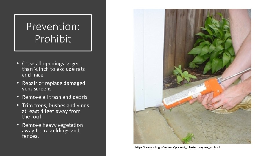 Prevention: Prohibit • Close all openings larger than ¼ inch to exclude rats and