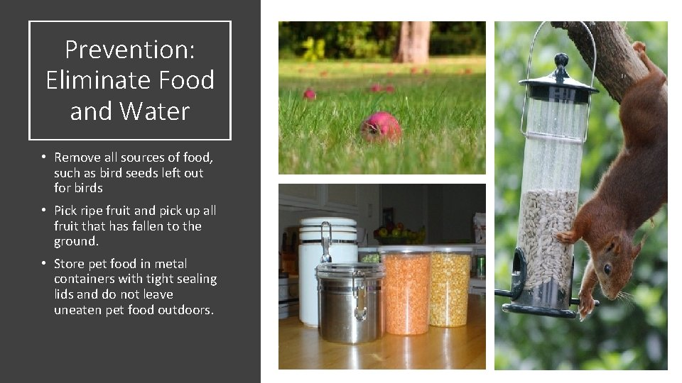 Prevention: Eliminate Food and Water • Remove all sources of food, such as bird