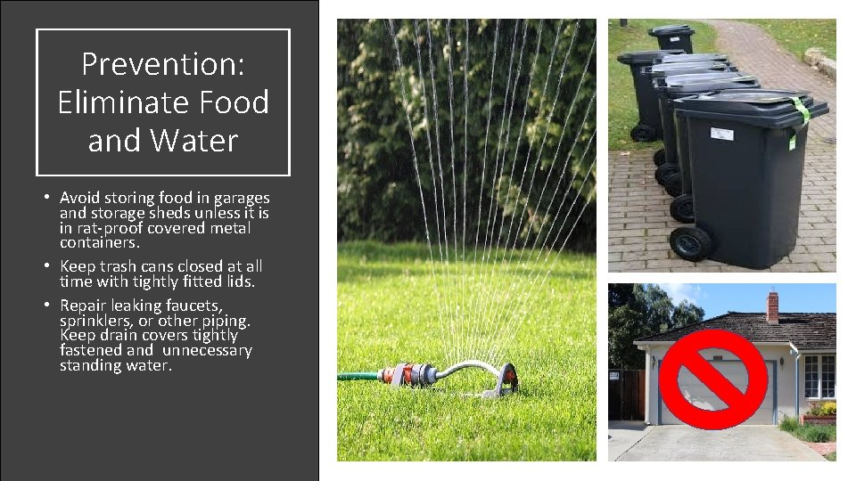 Prevention: Eliminate Food and Water • Avoid storing food in garages and storage sheds