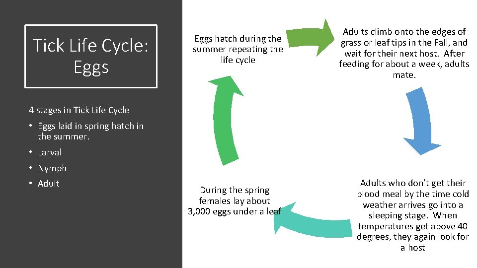 Tick Life Cycle: Eggs hatch during the summer repeating the life cycle Adults climb