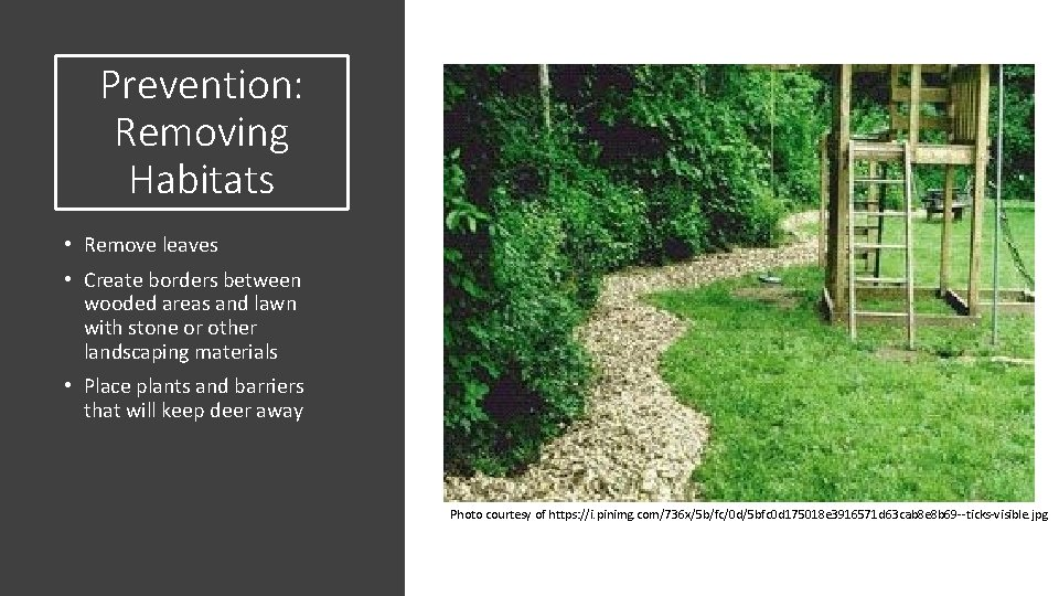 Prevention: Removing Habitats • Remove leaves • Create borders between wooded areas and lawn