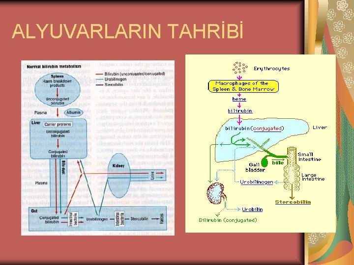 ALYUVARLARIN TAHRİBİ
