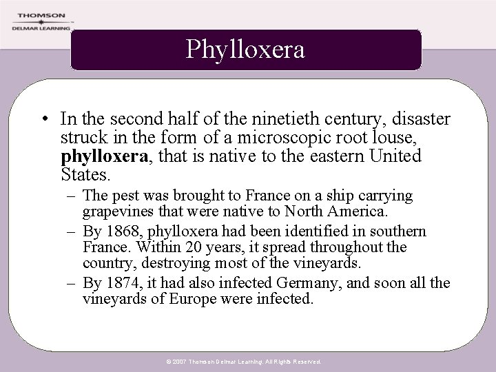 Phylloxera • In the second half of the ninetieth century, disaster struck in the