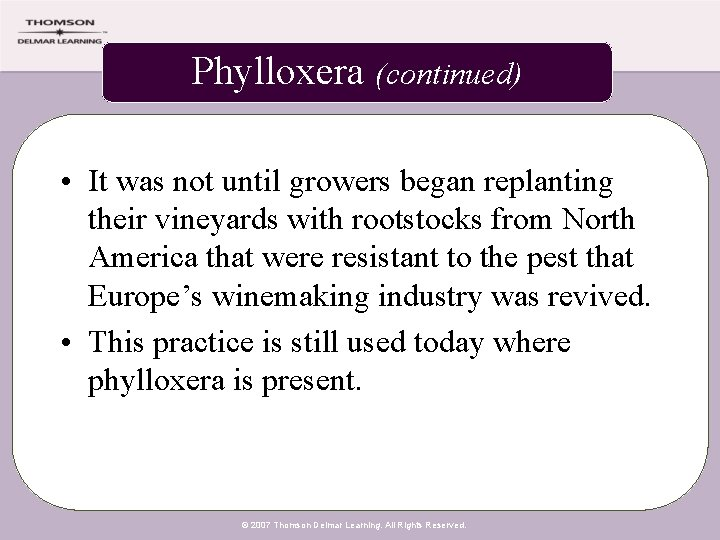 Phylloxera (continued) • It was not until growers began replanting their vineyards with rootstocks