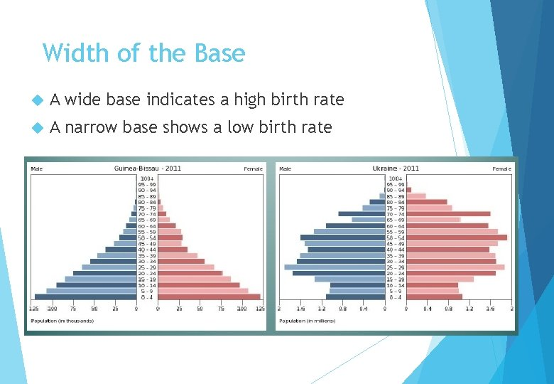 Width of the Base A wide base indicates a high birth rate A narrow