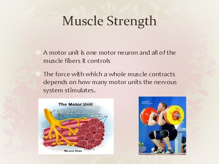 Muscle Strength A motor unit is one motor neuron and all of the muscle