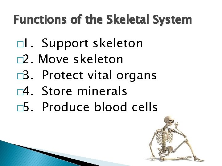 Functions of the Skeletal System � 1. � 2. � 3. � 4. �