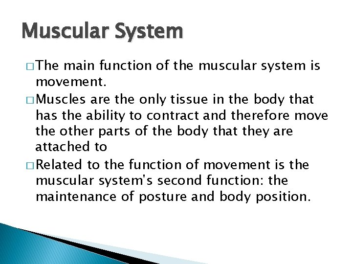 Muscular System � The main function of the muscular system is movement. � Muscles