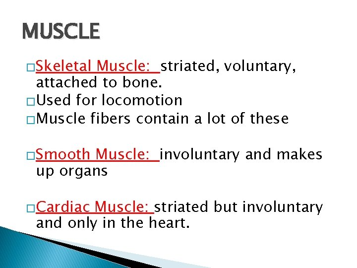 MUSCLE �Skeletal Muscle: striated, voluntary, attached to bone. �Used for locomotion �Muscle fibers contain