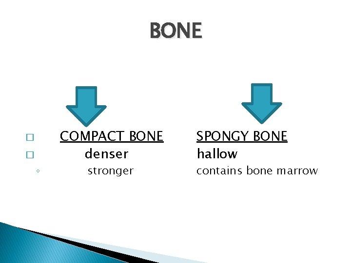 BONE � � ◦ COMPACT BONE denser stronger SPONGY BONE hallow contains bone marrow