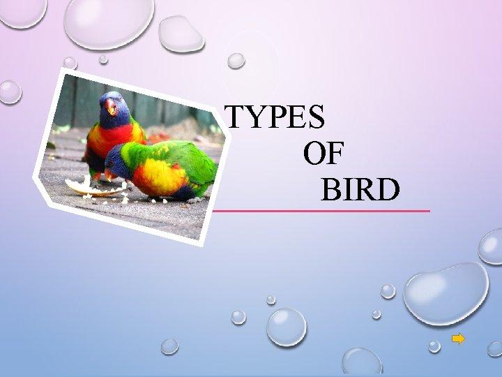 TYPES OF BIRD