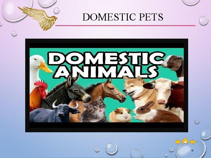 DOMESTIC PETS 4