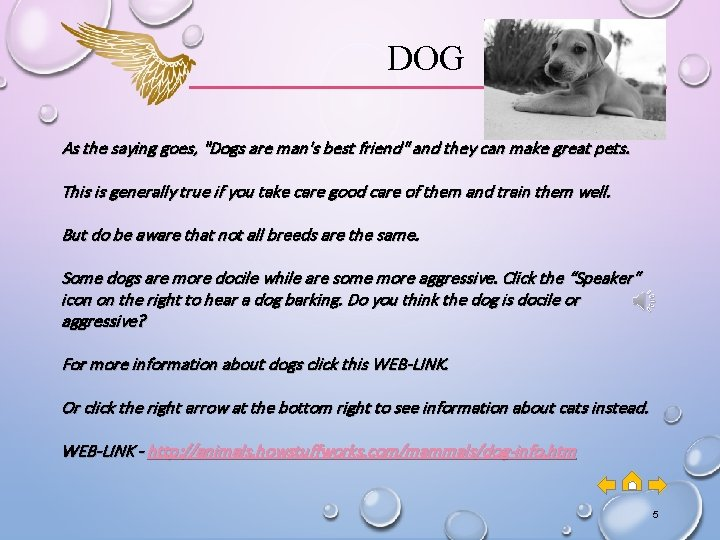 """DOG As the saying goes, """"Dogs are man's best friend"""" and they can make"""