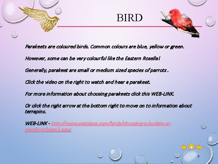 BIRD Parakeets are coloured birds. Common colours are blue, yellow or green. However, some