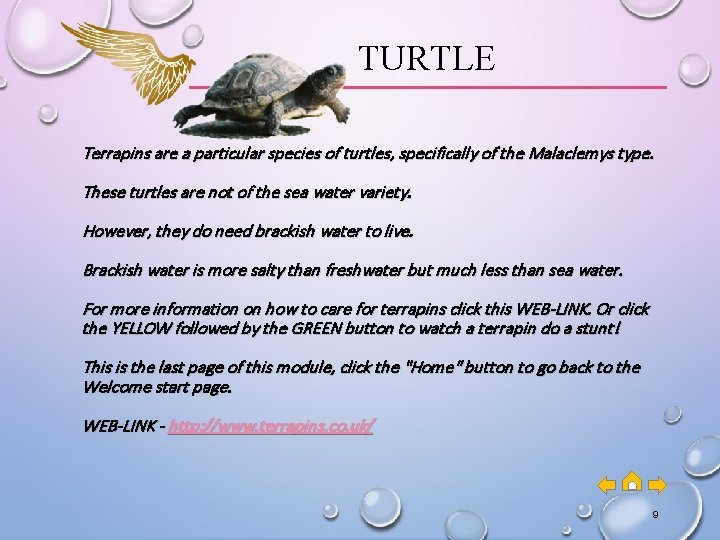 TURTLE Terrapins are a particular species of turtles, specifically of the Malaclemys type. These