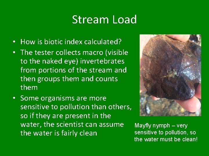Stream Load • How is biotic index calculated? • The tester collects macro (visible