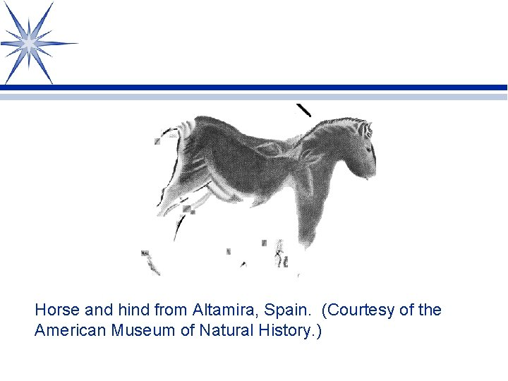 Horse and hind from Altamira, Spain. (Courtesy of the American Museum of Natural History.