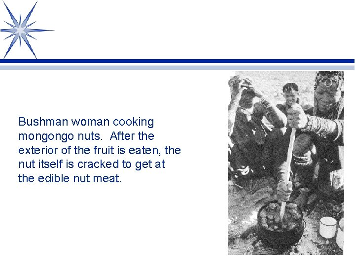 Bushman woman cooking mongongo nuts. After the exterior of the fruit is eaten, the