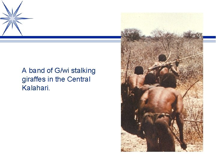 A band of G/wi stalking giraffes in the Central Kalahari.