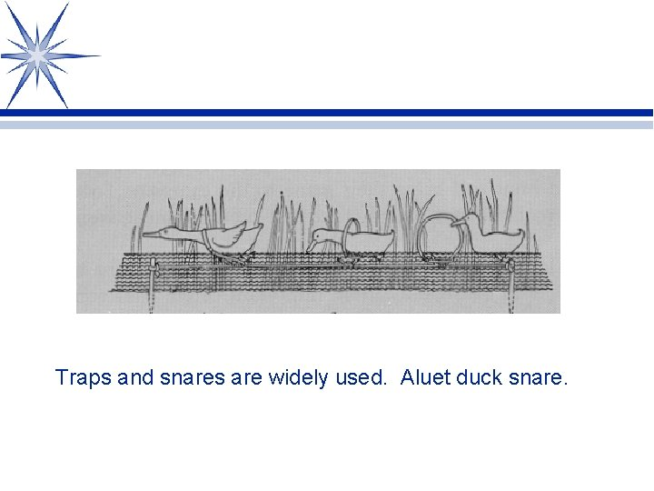 Traps and snares are widely used. Aluet duck snare.