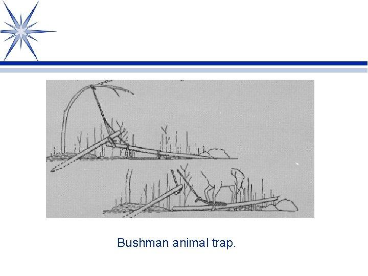 Bushman animal trap.