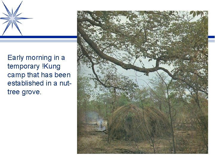 Early morning in a temporary !Kung camp that has been established in a nuttree