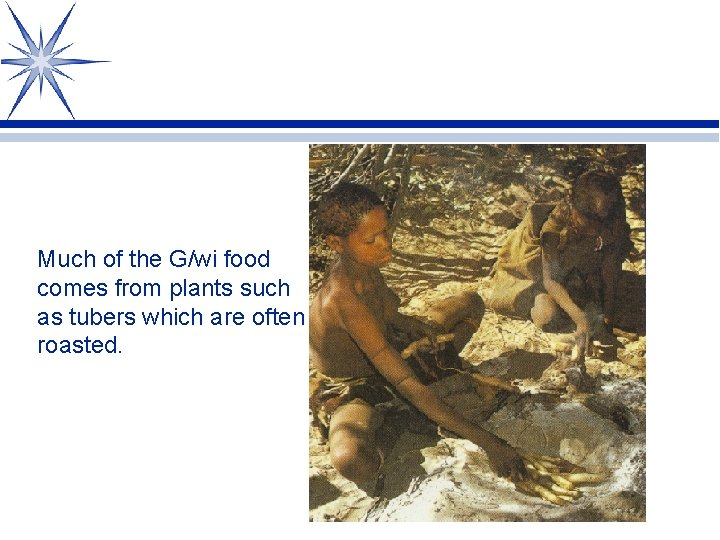 Much of the G/wi food comes from plants such as tubers which are often