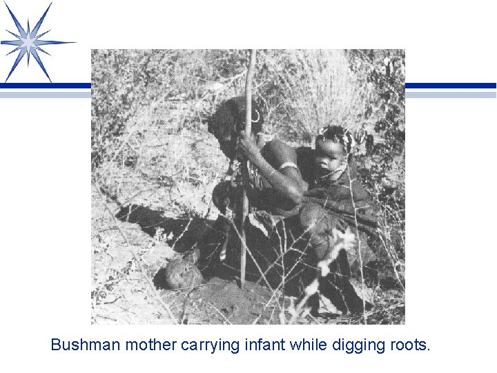 Bushman mother carrying infant while digging roots.