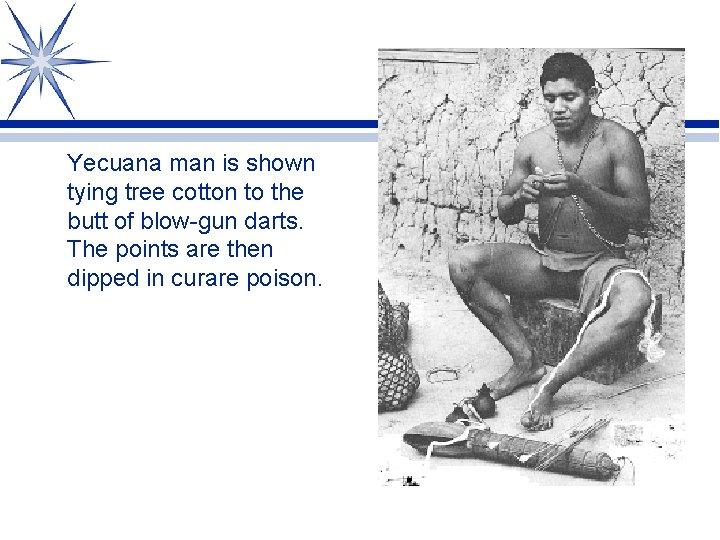 Yecuana man is shown tying tree cotton to the butt of blow-gun darts. The