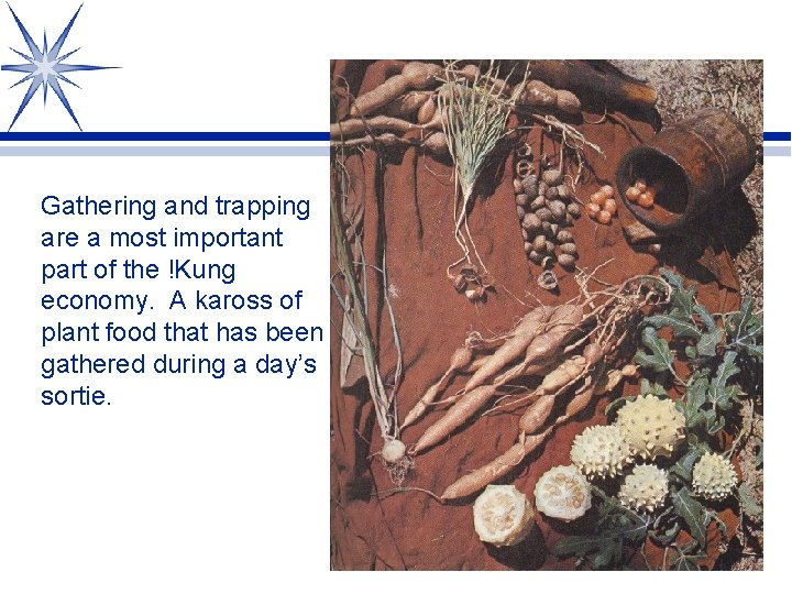 Gathering and trapping are a most important part of the !Kung economy. A kaross