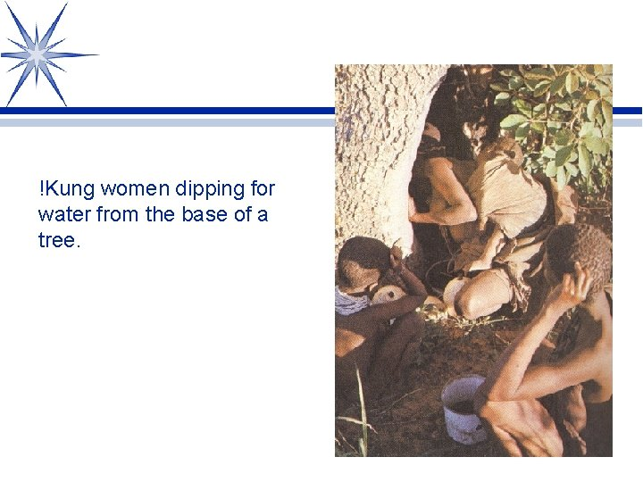 !Kung women dipping for water from the base of a tree.