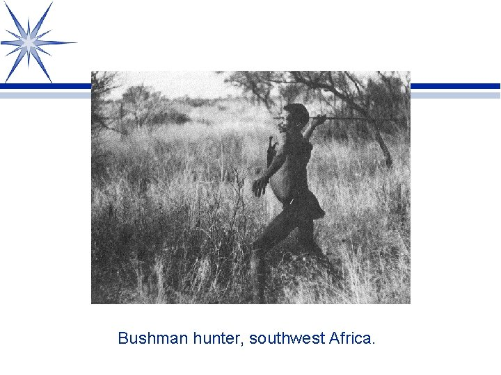 Bushman hunter, southwest Africa.