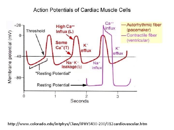 http: //www. colorado. edu/intphys/Class/IPHY 3430 -200/012 cardiovascular. htm