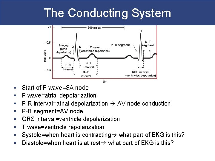 The Conducting System § § § § Start of P wave=SA node P wave=atrial