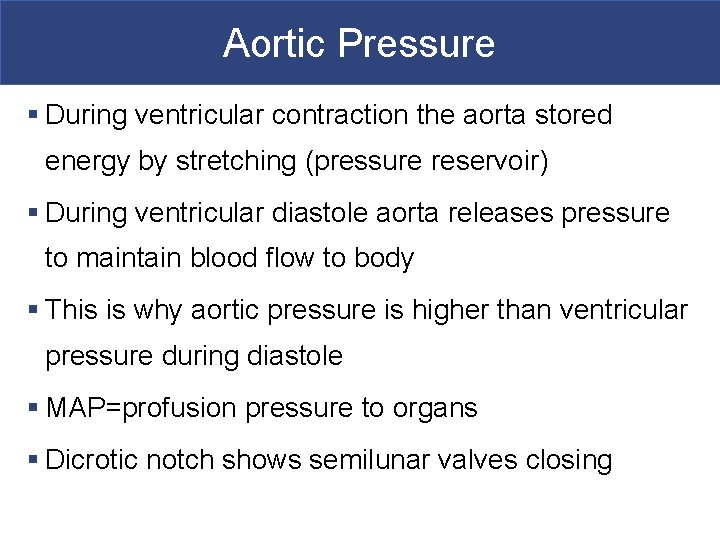 Aortic Pressure § During ventricular contraction the aorta stored energy by stretching (pressure reservoir)